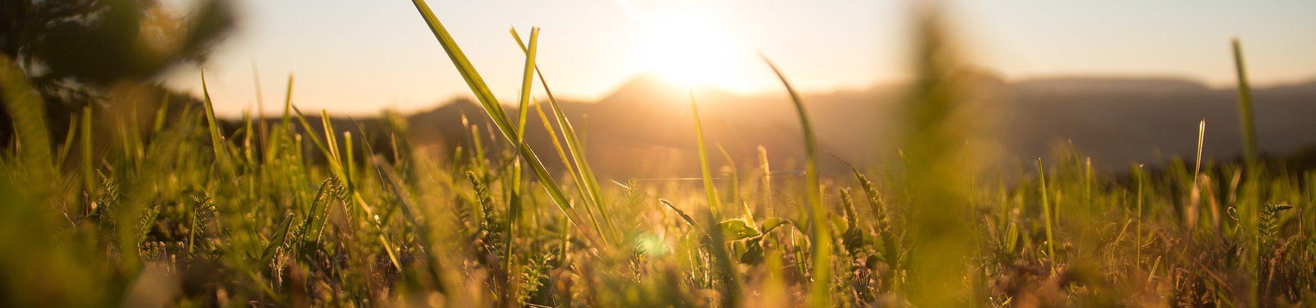 grass-1668423_1920